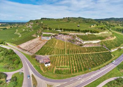 Weinreben am Vorderer Winklerberg, Luftaufnahme des VDP