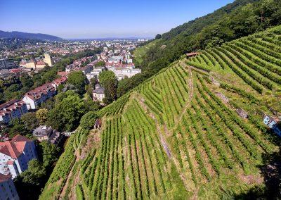 Steillage Schlossberg Freiburg